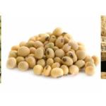 Jual Mesin Pulp Grinder Pembubur Kacang-Kacangan di Blitar
