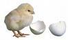 Mesin Penetas Telur Manual 30 Butir (EM-30) 1 tokomesin blitar